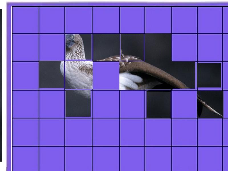 oiseau -Ajonc - 7 octobre trouvé par Martine - Page 2 Oiseau20