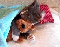 un animal - Blucat - 9 octobre trouvé par Martine - Page 3 Teddyh10