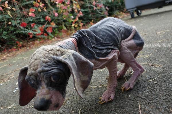 7 petits chiens retirés dans l'urgence Decede10