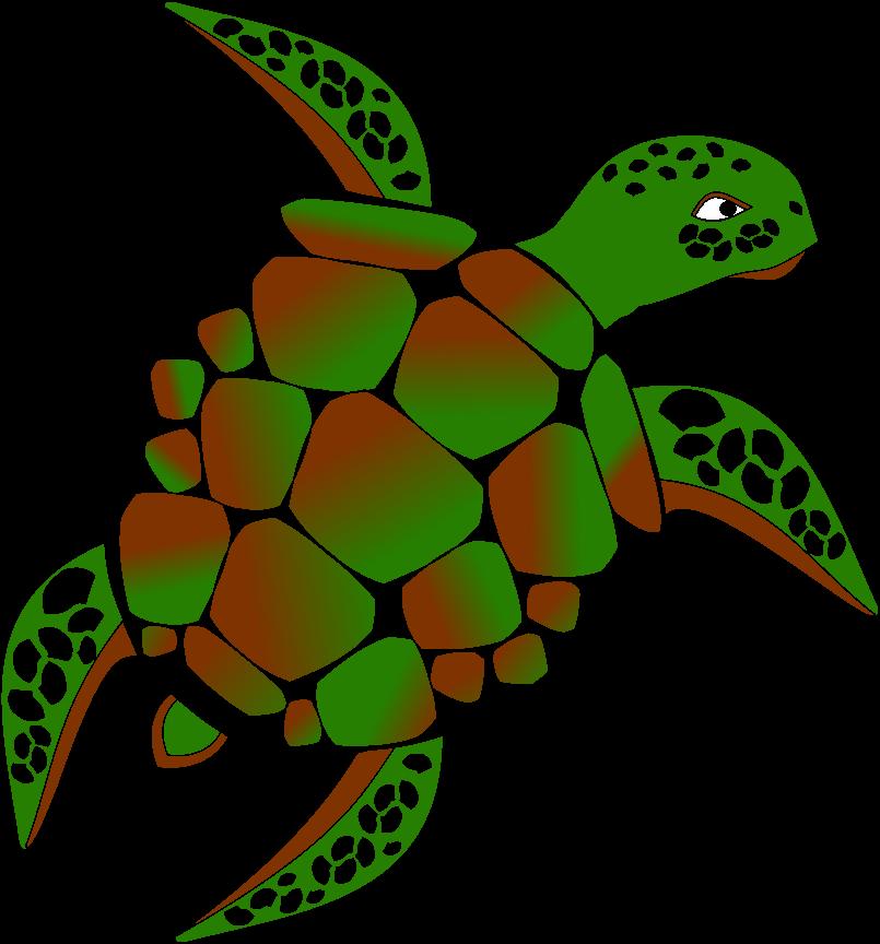 Schildkröte colorieren Umfrage  Krateg10