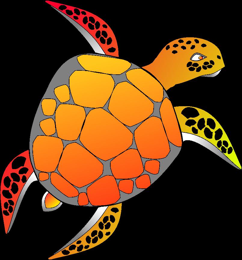 Schildkröte colorieren Umfrage  Krateg11