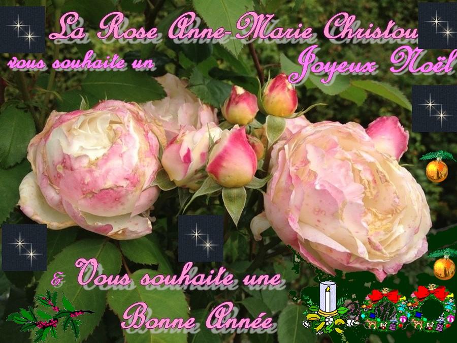 Joyeuses Fêtes Rose_a11
