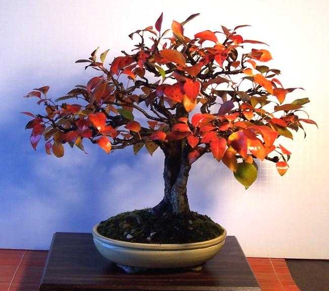 Mystery Tree Help please  11-13_10