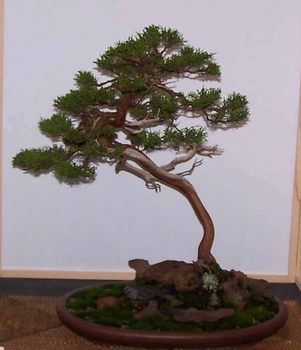 Carolina Bonsai Expo 2014 Blaauw10