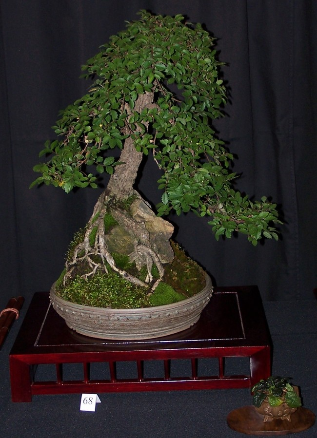 Carolina Bonsai Expo 2014 Cork_b10