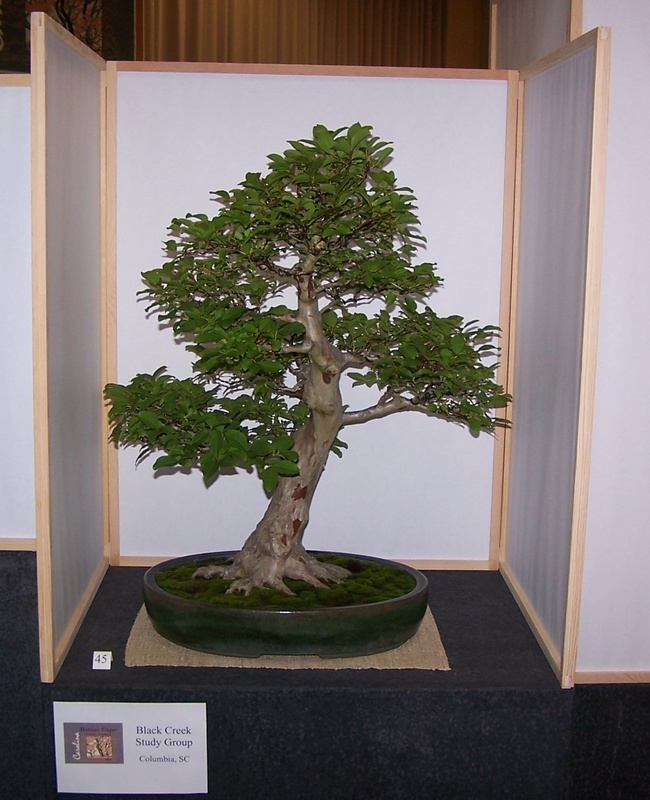 Carolina Bonsai Expo 2014 Crape_10