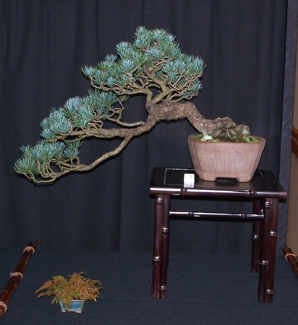 Carolina Bonsai Expo 2014 J_whit10