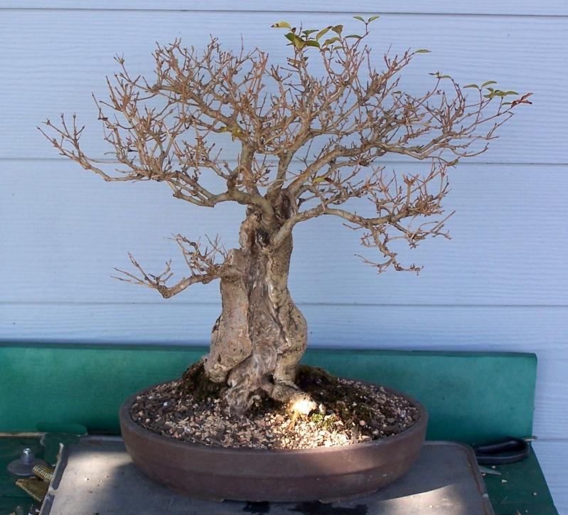 Oak style, Privet Prive010