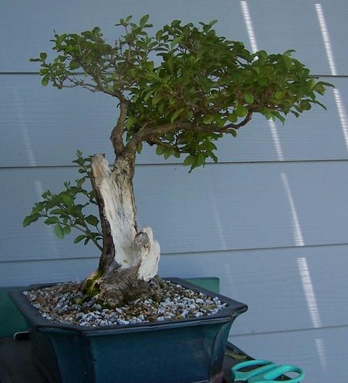 Oak style, Privet Prive011