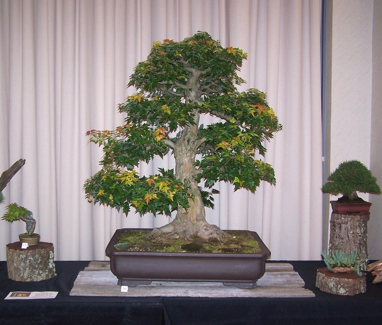 Carolina Bonsai Expo 2014 Two_tr10