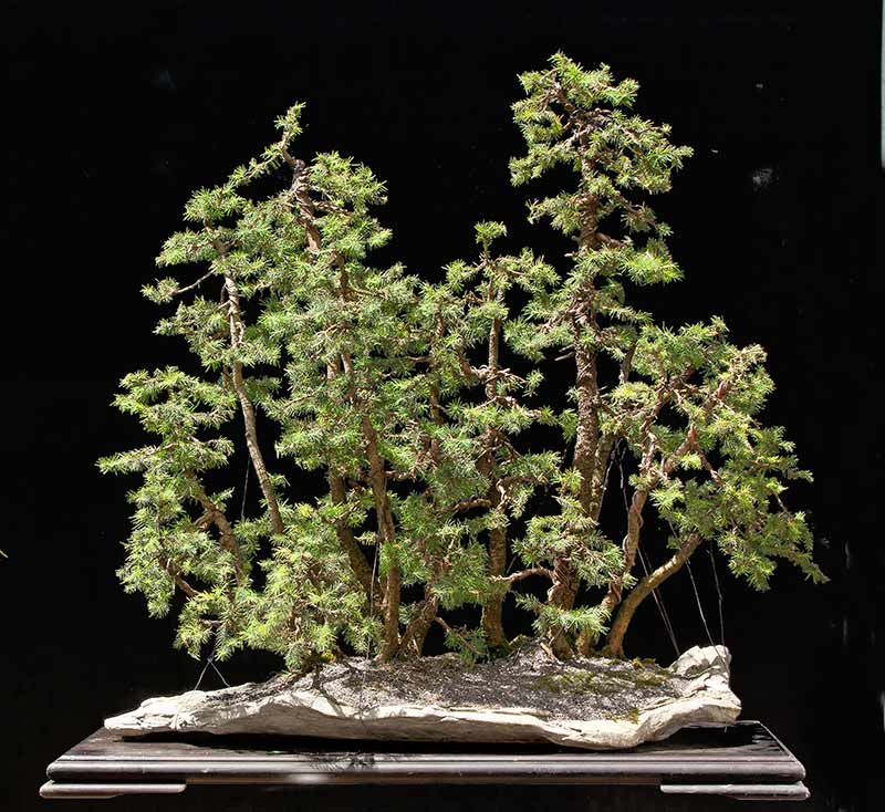 my new work - atelier bonsai Element - Page 9 R2c_3810
