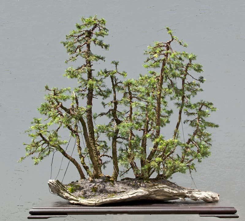 my new work - atelier bonsai Element - Page 9 R2c_3812