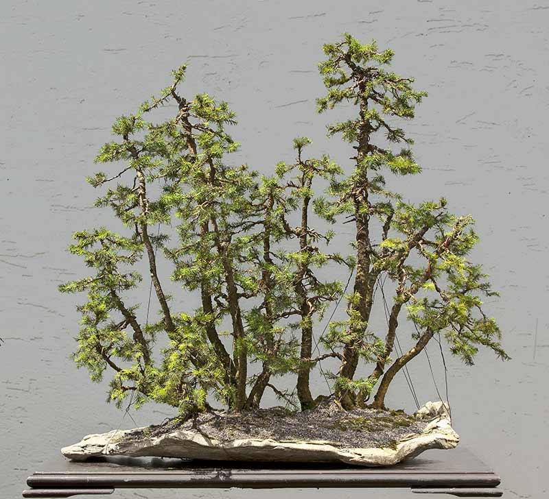 my new work - atelier bonsai Element - Page 9 R2c_3813