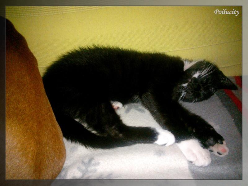 Jango the cat ! 0410