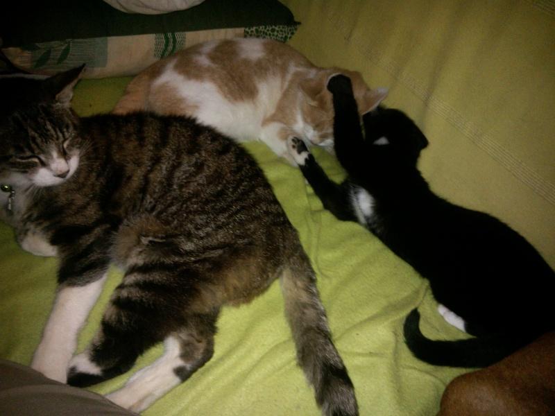 Jango the cat ! Wp_00514