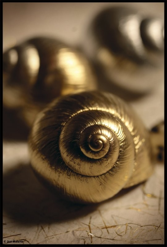 Escargots en chocolat 71b29910
