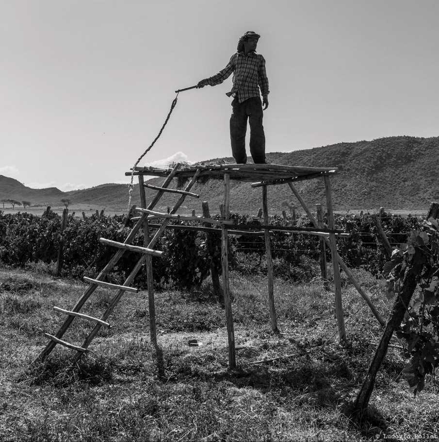Du vin à Ziway - Ethiopie 2014-124