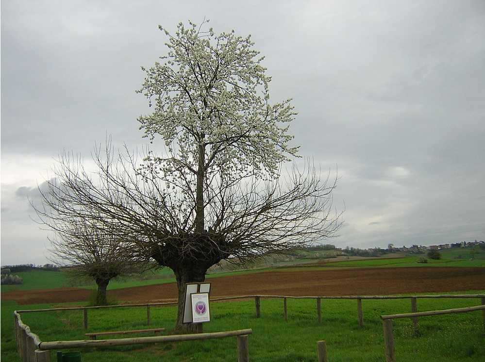 Bialbero di Casorzo - Casorzo - Piémont - Italie  2014-187