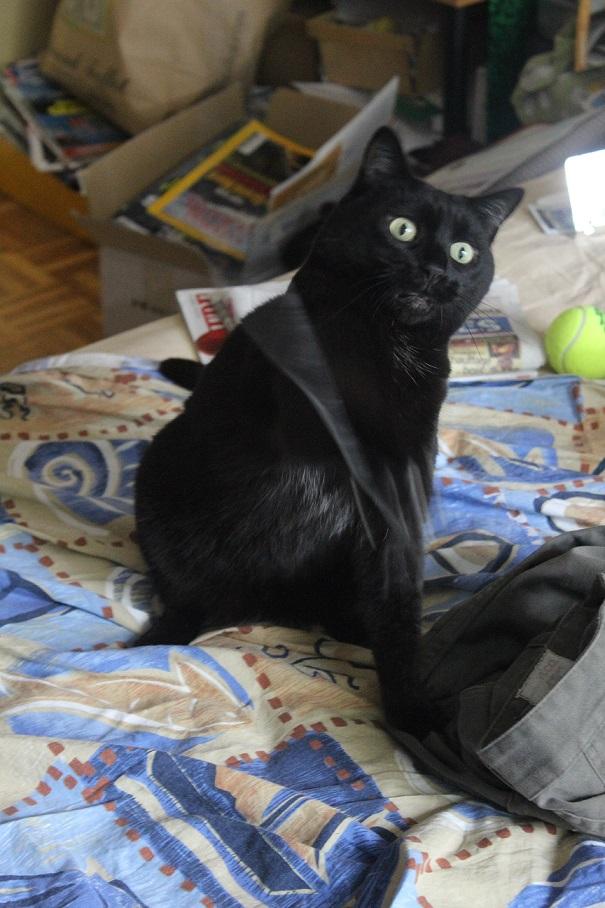 Lily, ma panthère noir Img_2616