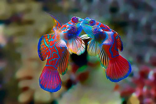 Những nụ hôn rực rỡ trong thế giới động vật 14010710