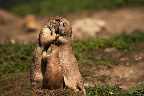 Những nụ hôn rực rỡ trong thế giới động vật 14010712
