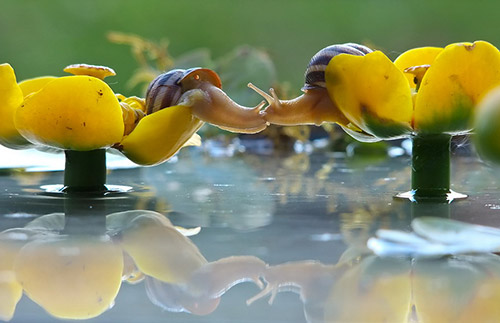Những nụ hôn rực rỡ trong thế giới động vật 14010713