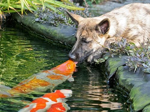 Những nụ hôn rực rỡ trong thế giới động vật 14010715