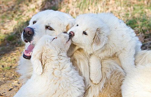 Những nụ hôn rực rỡ trong thế giới động vật 14010716