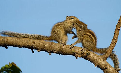 Những nụ hôn rực rỡ trong thế giới động vật 14010717