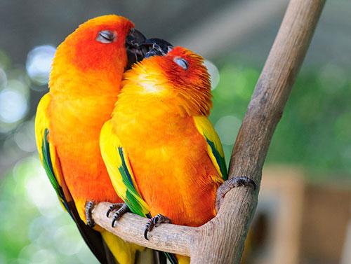 Những nụ hôn rực rỡ trong thế giới động vật 14010719