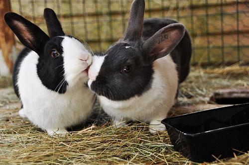 Những nụ hôn rực rỡ trong thế giới động vật 14010721