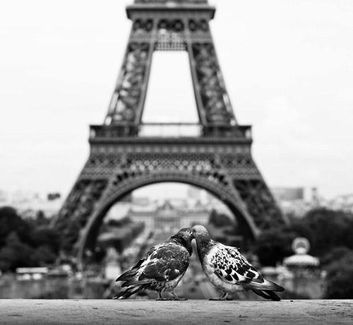 Những nụ hôn rực rỡ trong thế giới động vật 14010724