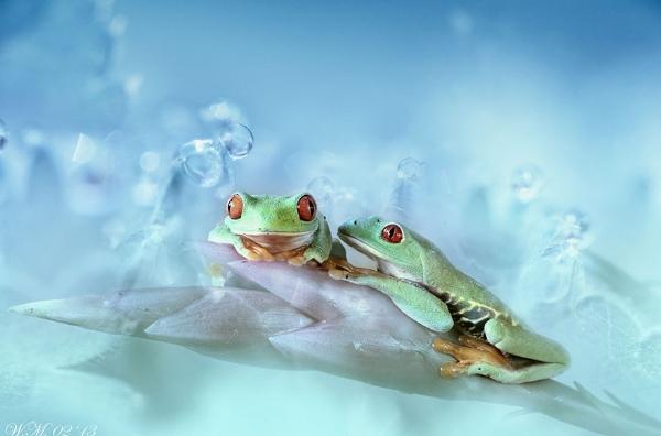 Thế giới cổ tích của những chú ếch  14614_10
