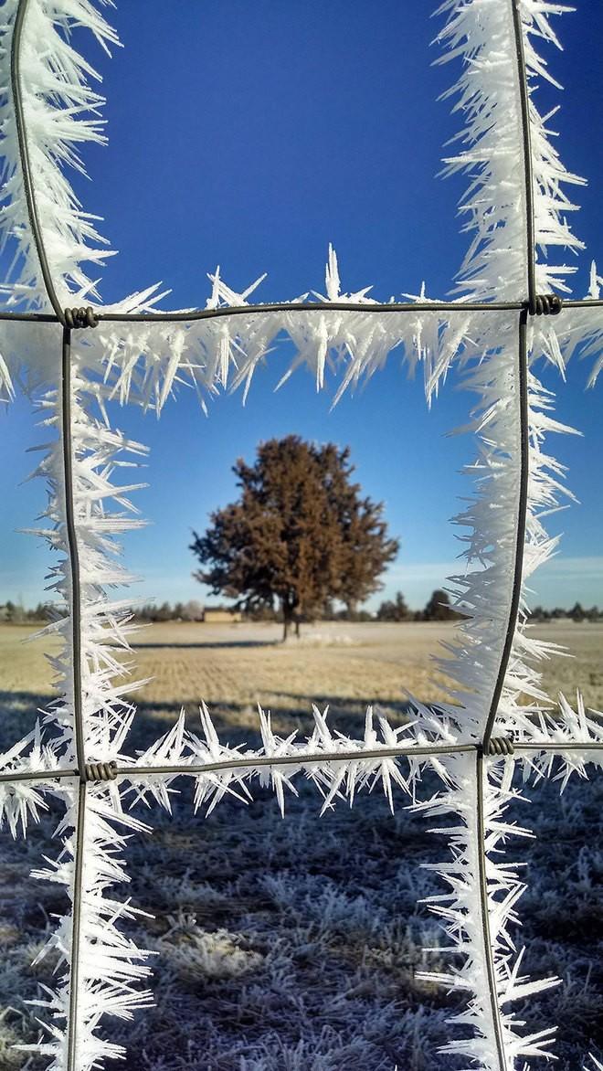 Vẻ đẹp lạnh giá của băng tuyết 15-14112