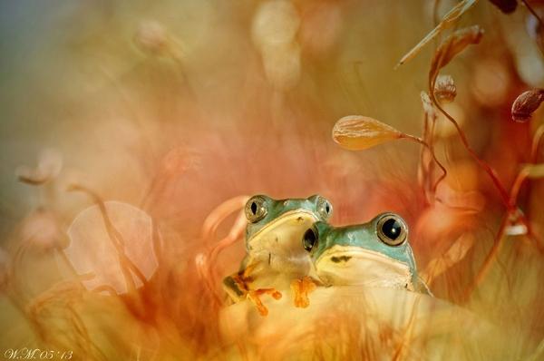Thế giới cổ tích của những chú ếch  1677_210