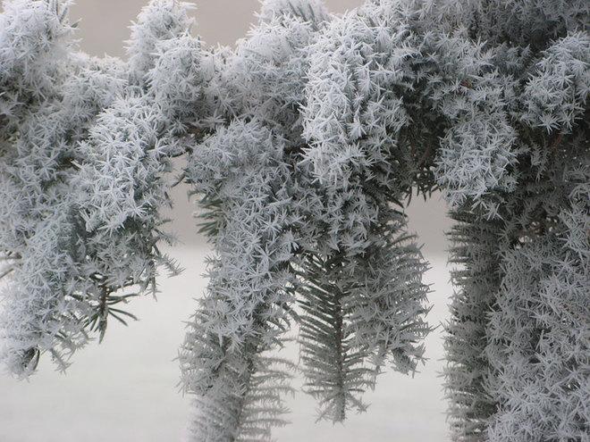Vẻ đẹp lạnh giá của băng tuyết 20-14113