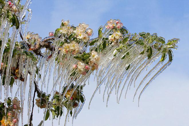 Vẻ đẹp lạnh giá của băng tuyết 23-14111