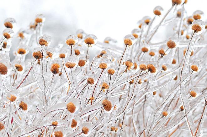 Vẻ đẹp lạnh giá của băng tuyết 24-14111