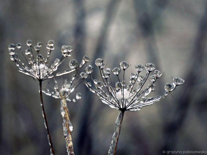 Vẻ đẹp lạnh giá của băng tuyết 30-14110