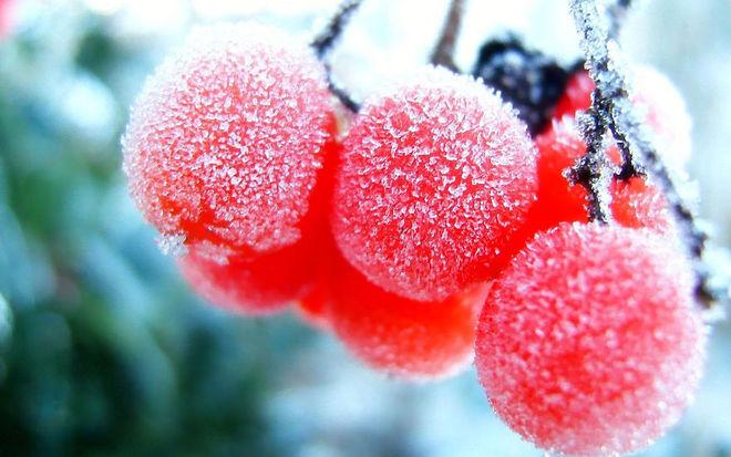 Vẻ đẹp lạnh giá của băng tuyết 31-14110
