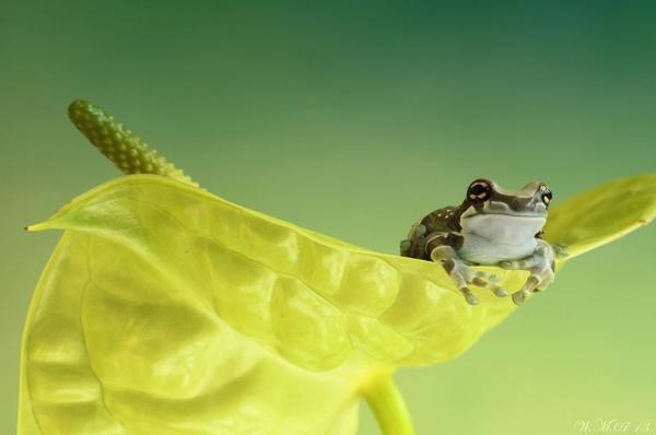 Thế giới cổ tích của những chú ếch  33509_10