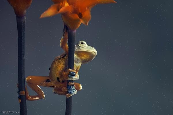 Thế giới cổ tích của những chú ếch  44839_10