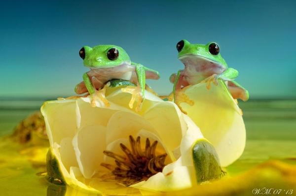 Thế giới cổ tích của những chú ếch  62027_10