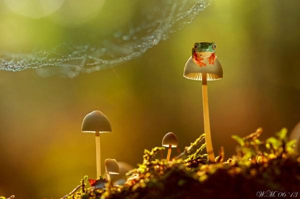 Thế giới cổ tích của những chú ếch  69823_10