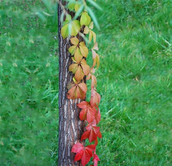 Sắc màu thiên nhiên vào thu Chum-a12