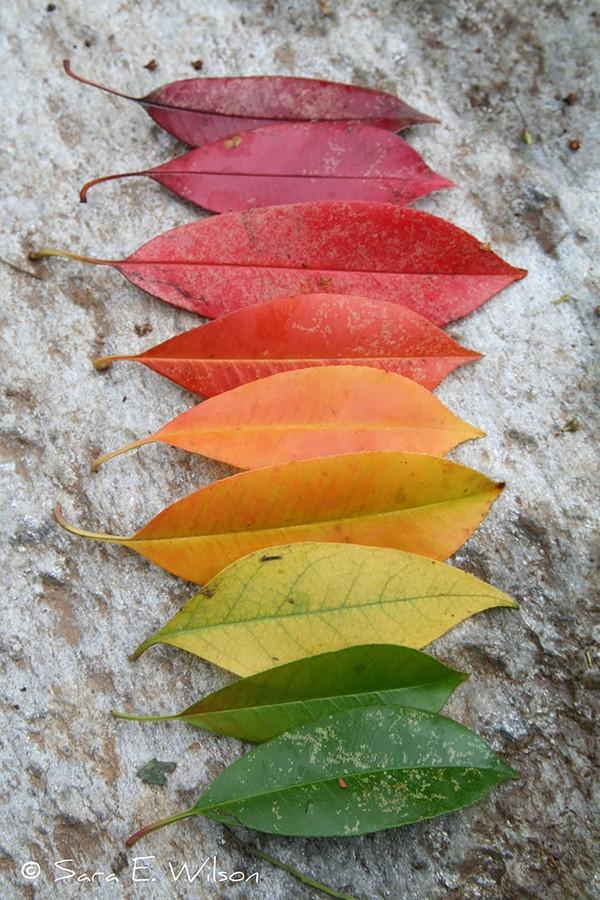 Sắc màu thiên nhiên vào thu Chum-a39
