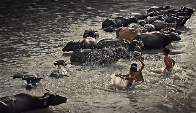 Khoảnh khắc cuộc sống bình dị, nên thơ ở làng quê Việt Cuoc-t15