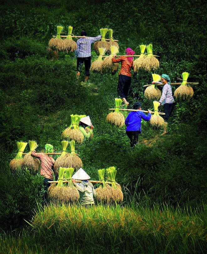 Khoảnh khắc cuộc sống bình dị, nên thơ ở làng quê Việt Cuoc-t25