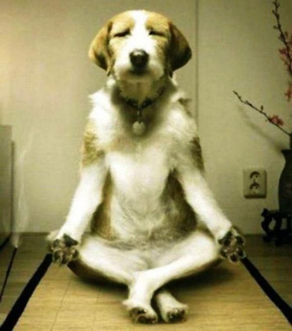 Chó tập Yoga F8b20510