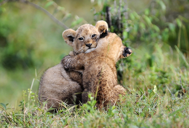 Sưởi ấm trái tim với những cái ôm ngọt ngào của động vật Huggin10